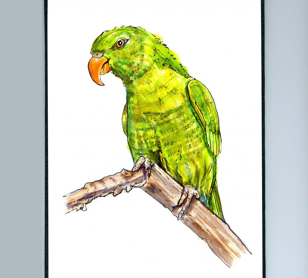 Parrot St. Patrick's Day Illustration - Doodlewash