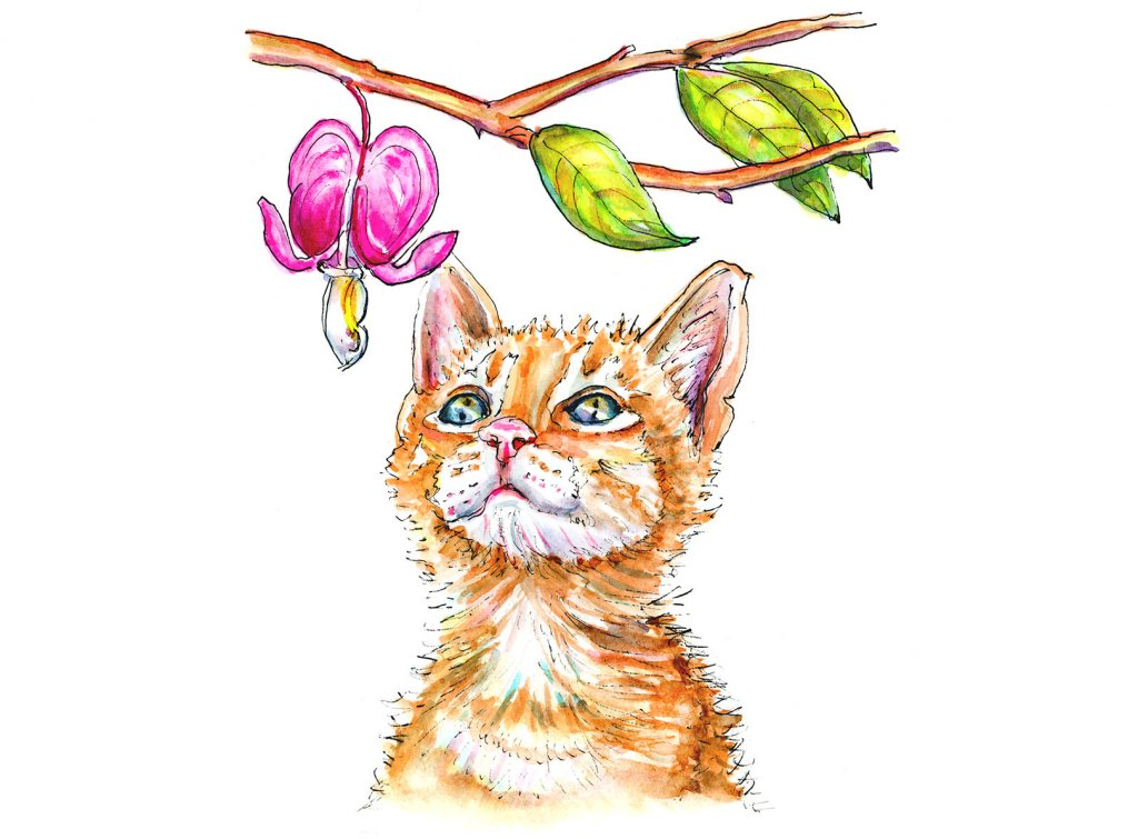 Day 23 - Cat Watercolor Illustration Bleeding Heart
