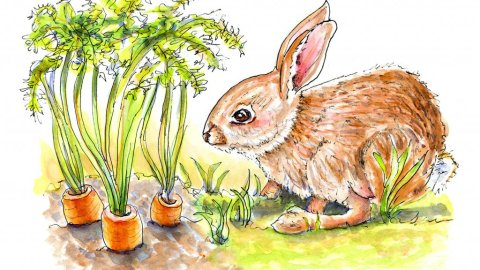 Day 26 - Bunny Rabbit Carrots Watercolor - Doodlewash