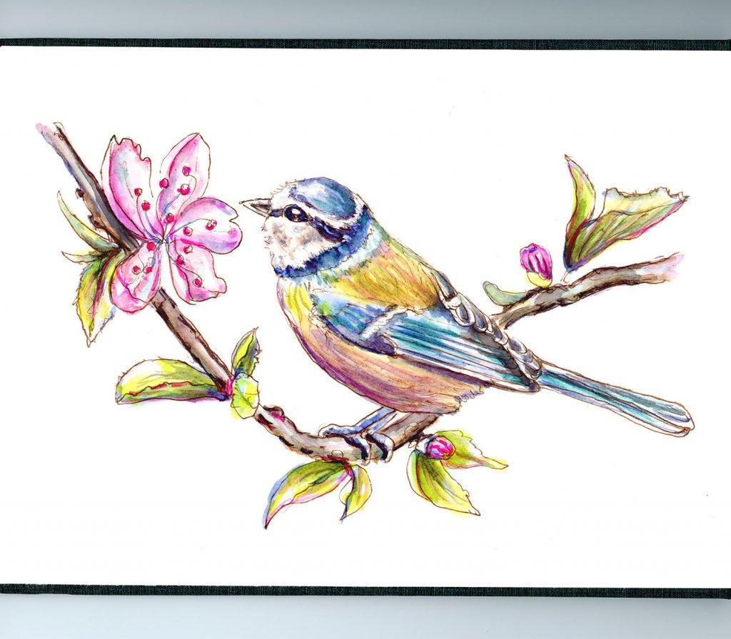 Cherry Blossoms Blue Tit Watercolor - Doodlewash