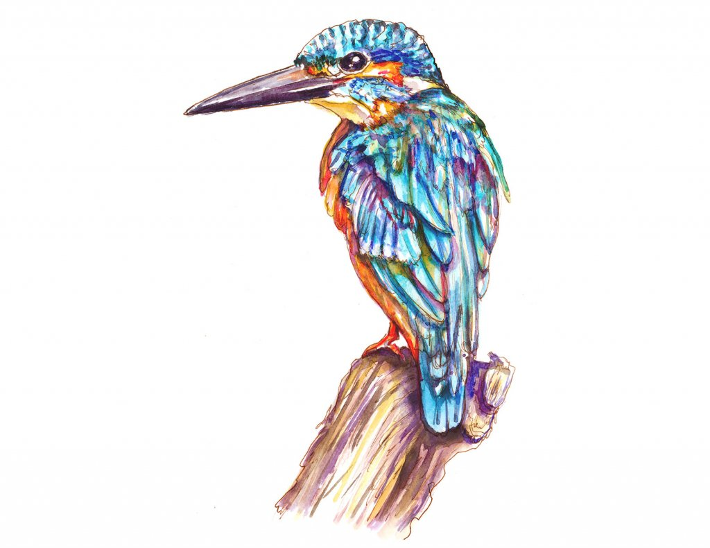 Day 8 - Kingfisher Illustration Watercolor - Doodlewash