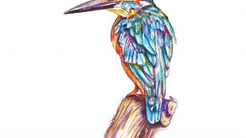 Day 8 - Kingfisher Illustration Watercolor - Doodlewash