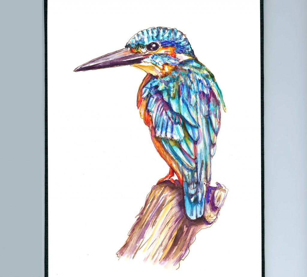 Kingfisher Illustration Watercolor Doodlewash