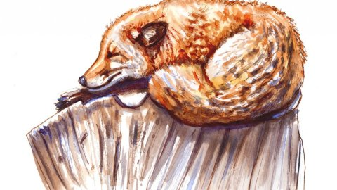Day 9 - Sleeping Fox Illustration Watercolor - Doodlewash