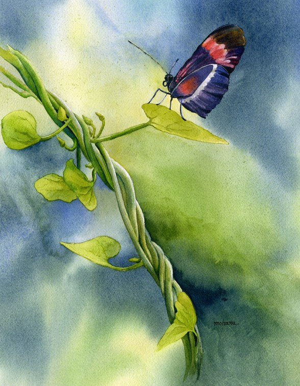 Butterfly Watercolor Painting by Mohana Pradhan - Doodlewash