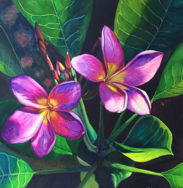 Pink Plumeria Watercolor Painting by Prerana Kulkarni - Doodlewash