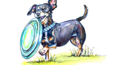 Day 15 - Dachshund Dog With Frisbee Illustration Watercolor - Doodlewash