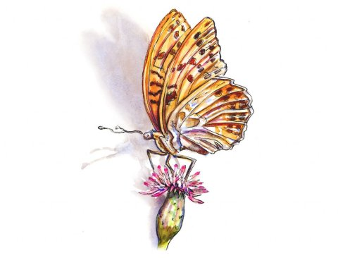 Butterfly Watercolor Illustration - Doodlewash