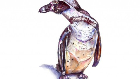 Penguin Watercolor Illustration - Doodlewash