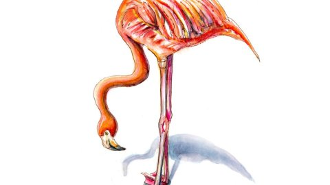 Day 8 - Flamingo Watercolor Illustration - Doodlewash