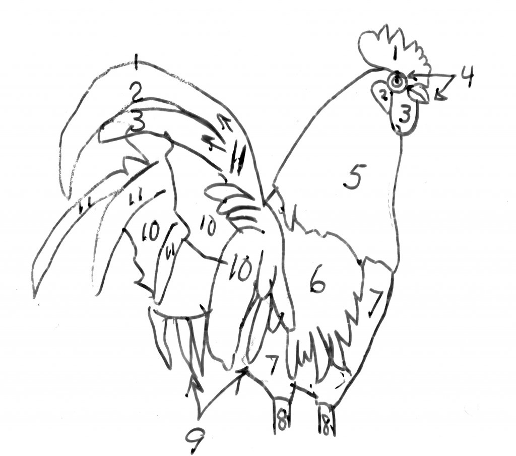 Finding the main feather groups in a rooster bird drawing