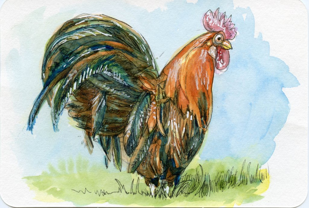 Final Rooster Watercolor Illustration by Sandra Strait - Doodlewash
