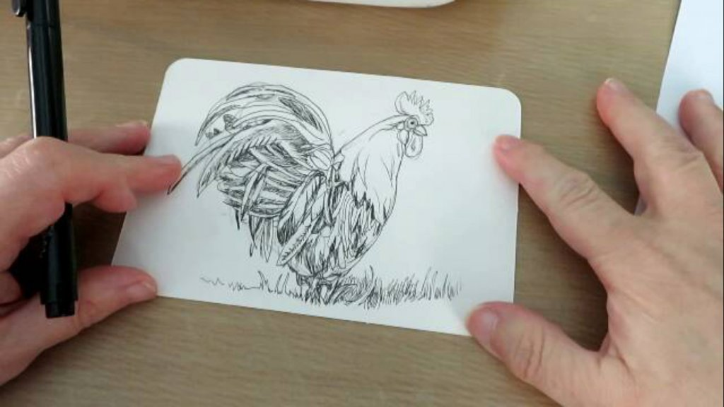 Pen and Ink Rooster Drawing