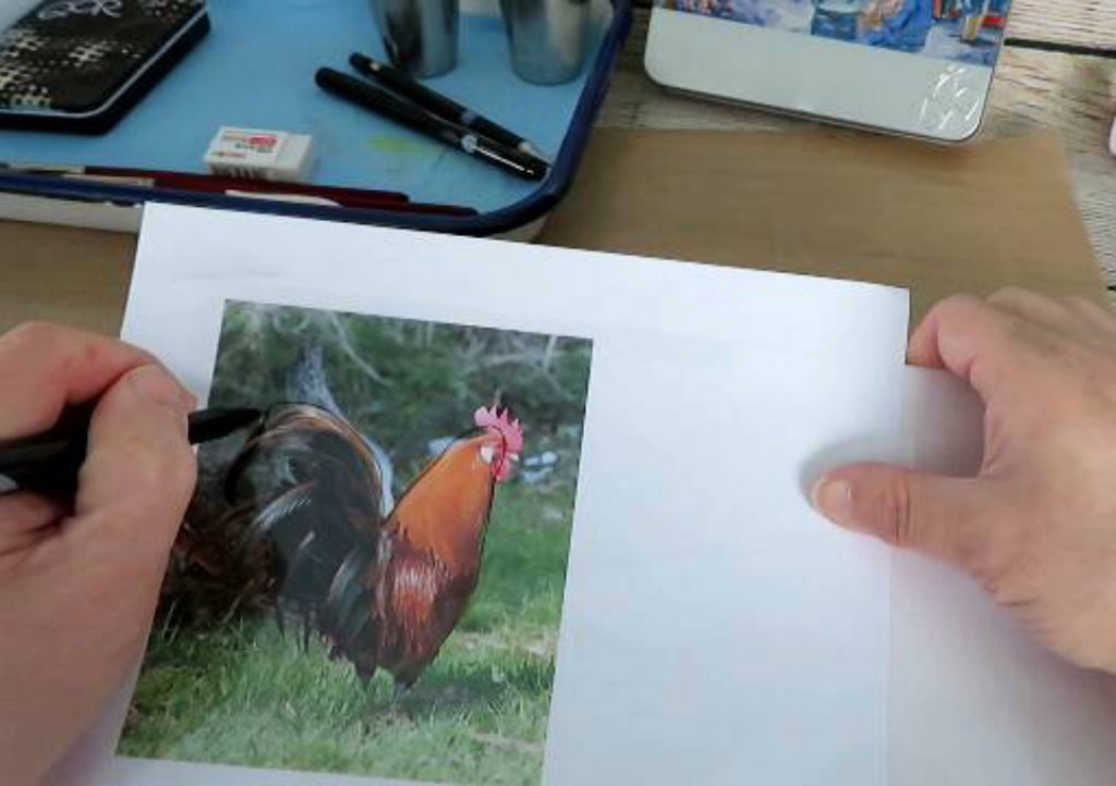 Drawing A Rooster Using A Reference Photo