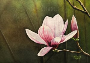 Another Magnolia flower in watercolor Enjoyed painting this one! Done on Saunders Waterford cold pre
