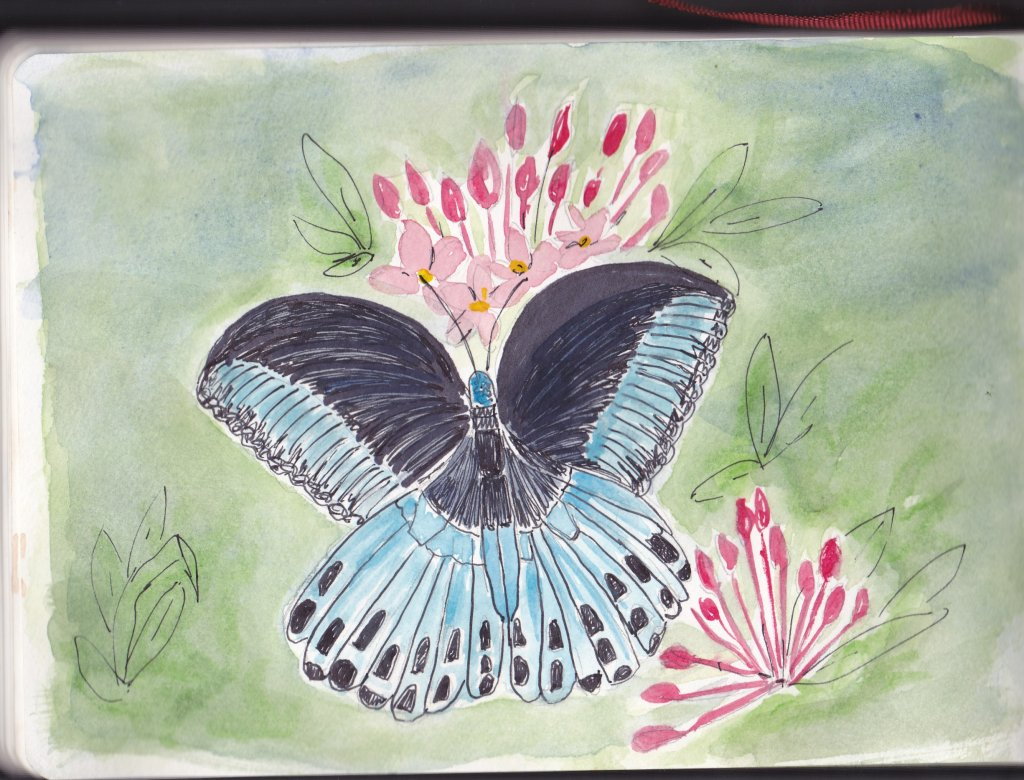 Prompt Day 12-Black and Blue-A butterfly that we saw in Bangladesh last November. I wish I could tel