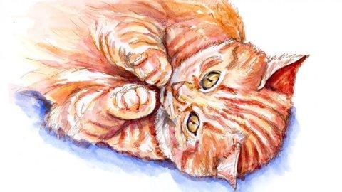 Tabby Cat Illustration Watercolor - Doodlewash