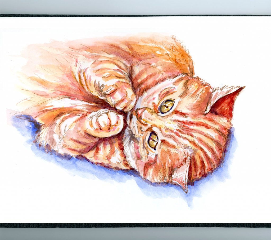 Day 11 - Tabby Cat Illustration Watercolor - Doodlewash