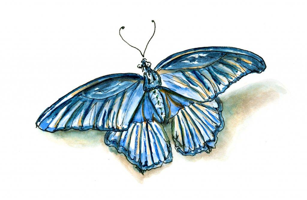 Day 12 - Blue Butterfly Illustration - Doodlewash