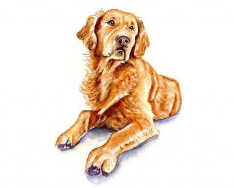 Golden Retriever Watercolor Illustration - Doodlewash