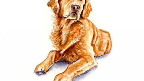 Golden Retriever Watercolor Illustration - Doodlewash