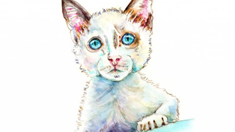 White Cat Watercolor Illustration - Doodlewash