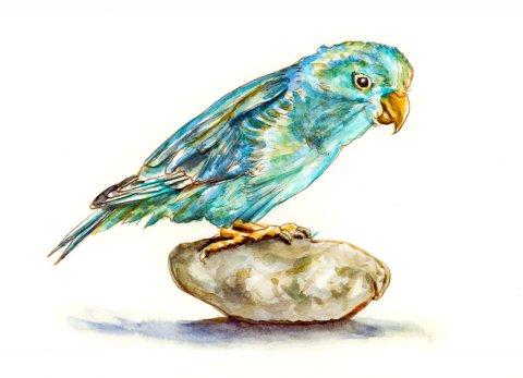 Blue Parrot Watercolor Illustration - Doodlewash