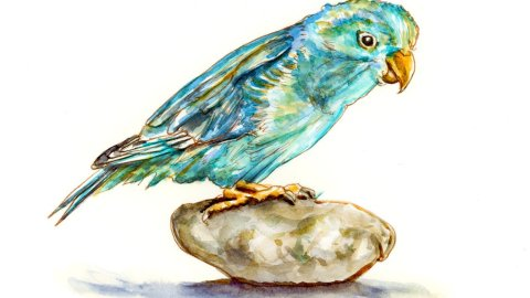 Blue Parrot Watercolor Illustration - Doodlewash