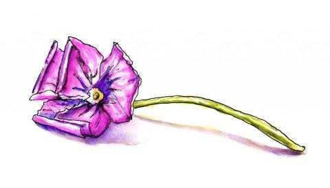 Purple Flower Watercolor Illustration - Doodlewash