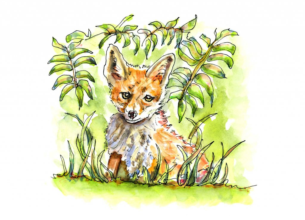 Fox In The Grass Watercolor Illustration - Doodlewash