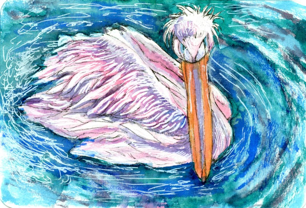 prompt \'Tickled Pink\'. I chose the Great White Pelican for the prompt because during t