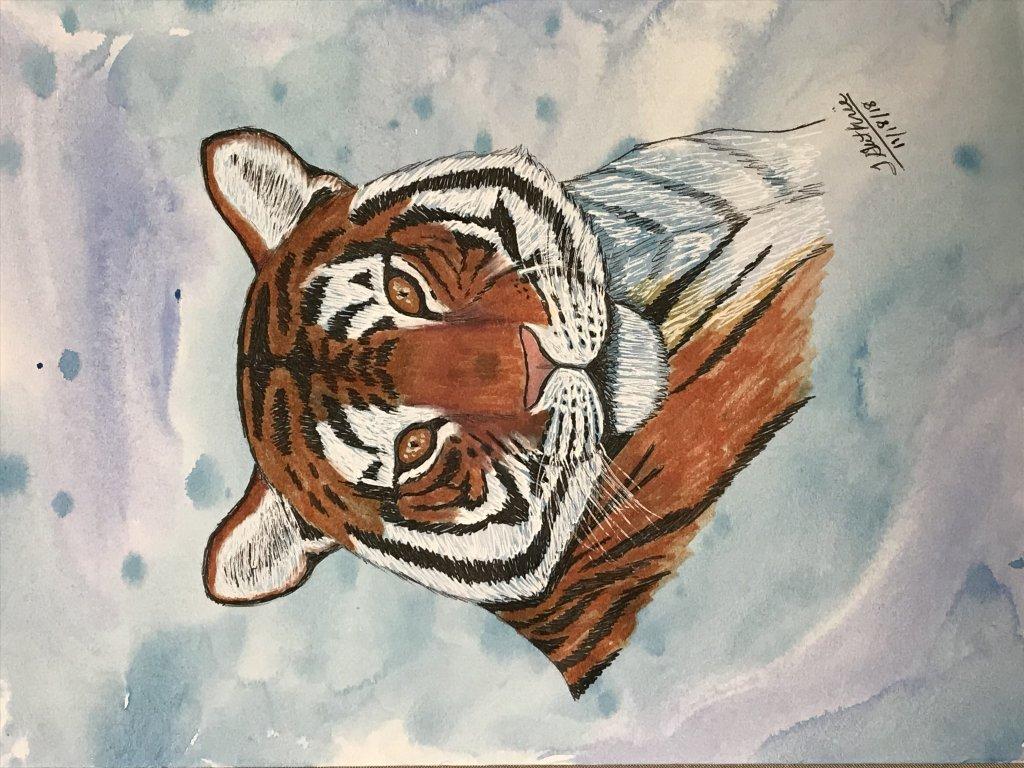 Joys Art 360 Painted HawkJoys Art 360 TigerJoys Art 360 Zebra Drawing on Watercolor Background