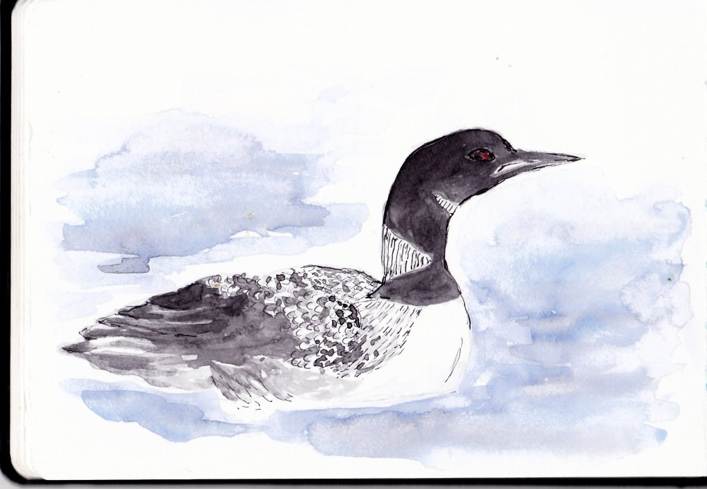 Doodlewash Prompt Day 21-Black and White. The Black and White diver loon is the Minnesota State Bird