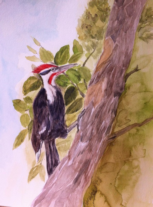 Pileated Woodpecker Watercolor Painting by Karalee Hammes - Doodlewash