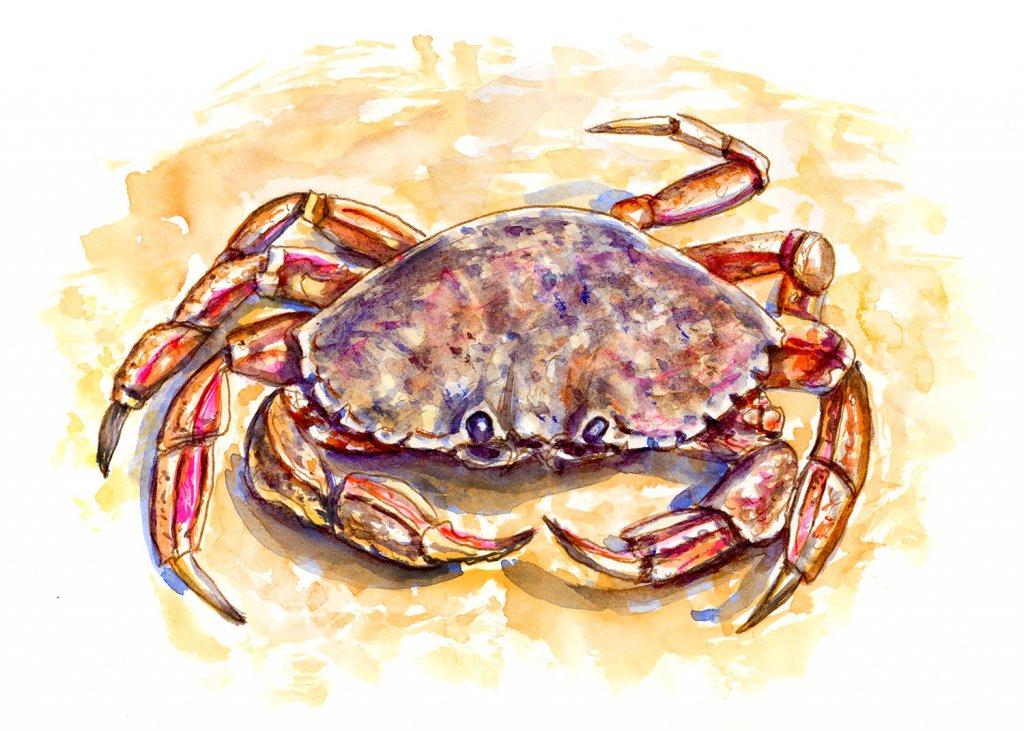 Crab On Beach Watercolor Illustration