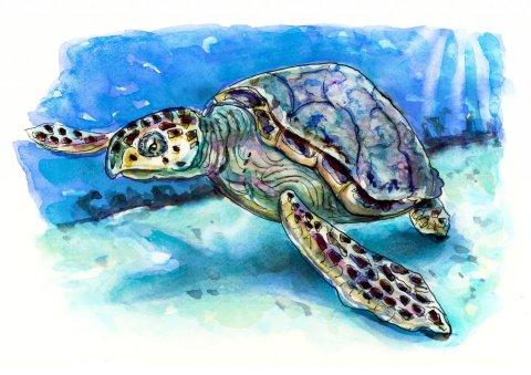 Sea Turtle Watercolor Illustration
