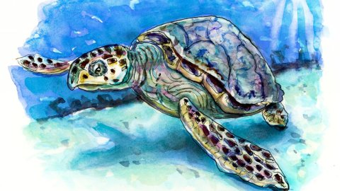Sea Turtle Watercolor Illustration