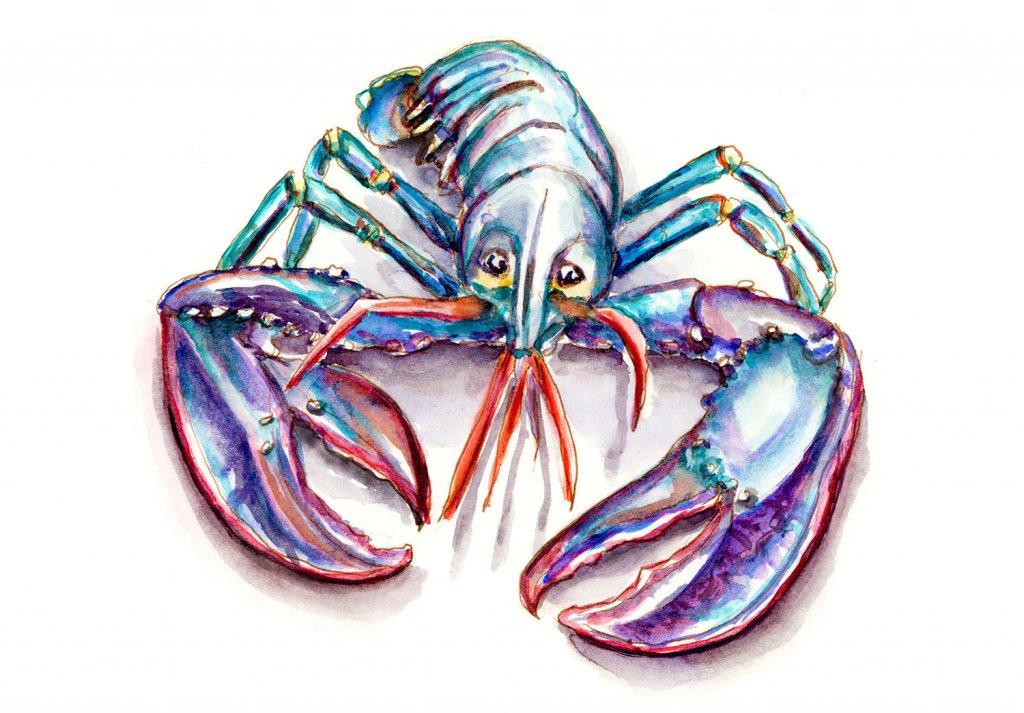 Blue Lobster European Homard breton Illustration - Doodlewash