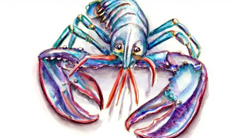 Blue Lobster European Homard breton Illustration - Doodlewash
