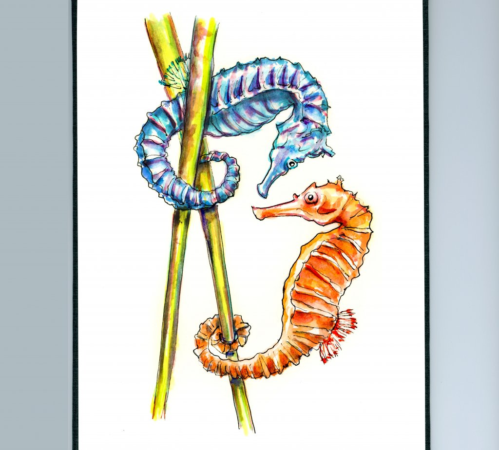 Day 7 - Two Seahorses Watercolor Illustration_IG