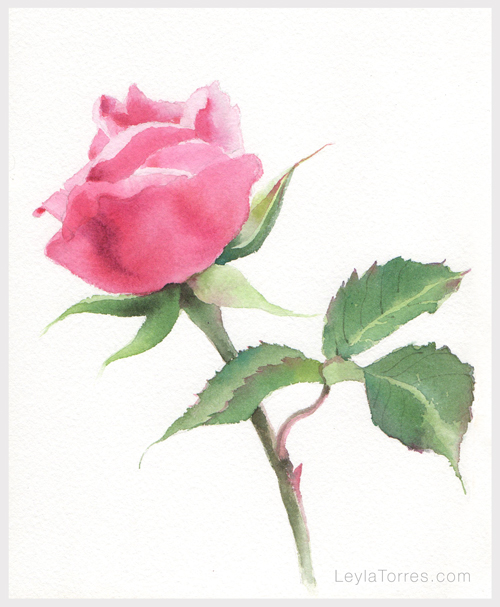 Rose in watercolor Painting Step 4