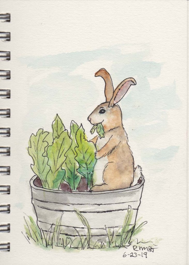 Rabbit enjoying a picnic in our tub of lettuce. picnic