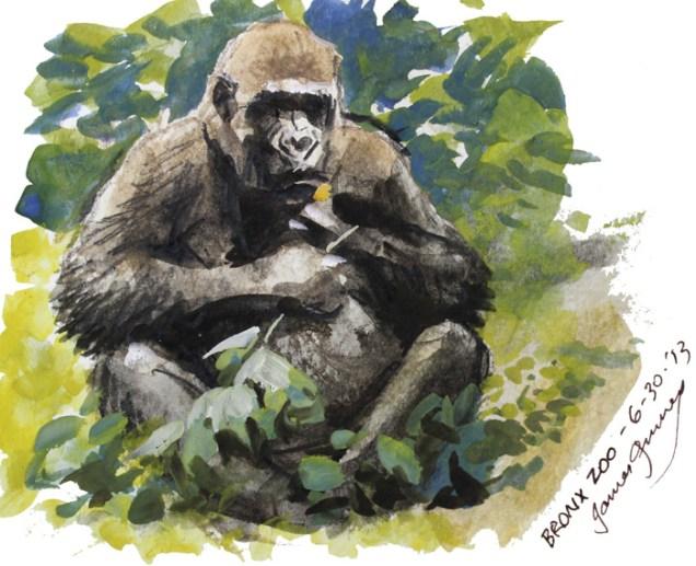 Bronx Zoo Gorilla Illustration Gouache James Gurney