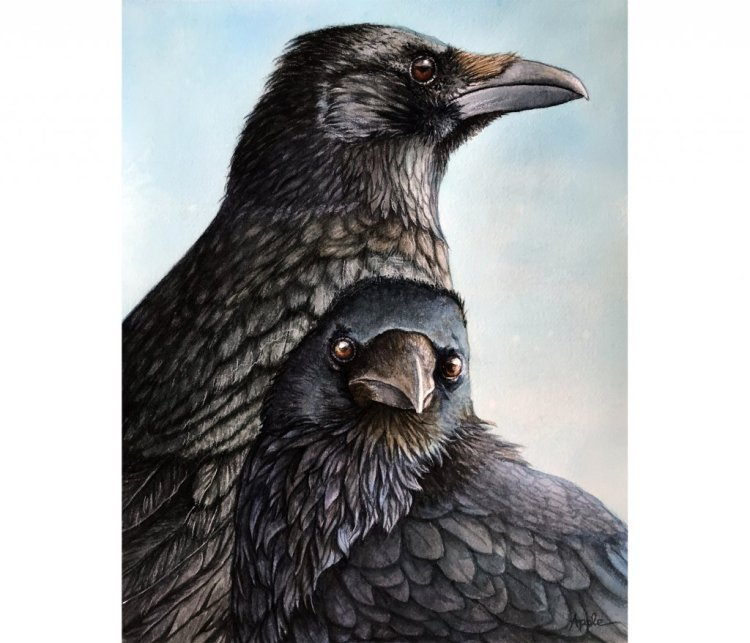 Majestic Crows – 11 x 14″ watercolor on Arches 140# CP. This was a recent commission. #w