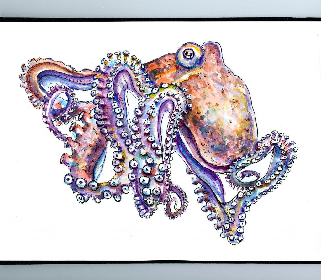 Octopus Watercolor Illustration Sketchbook Detail