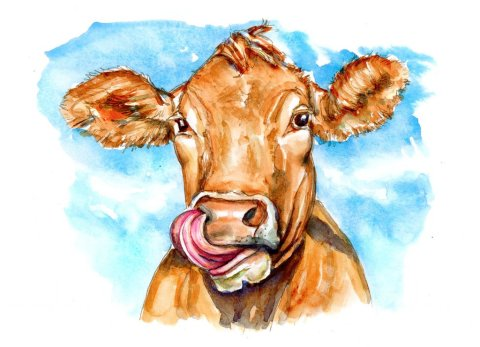Cow Tongue In Nose Watercolor Illustration