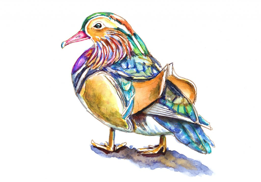 Madarin Duck Watercolor Illustration