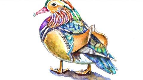 Madarin Duck Watercolor Illustration