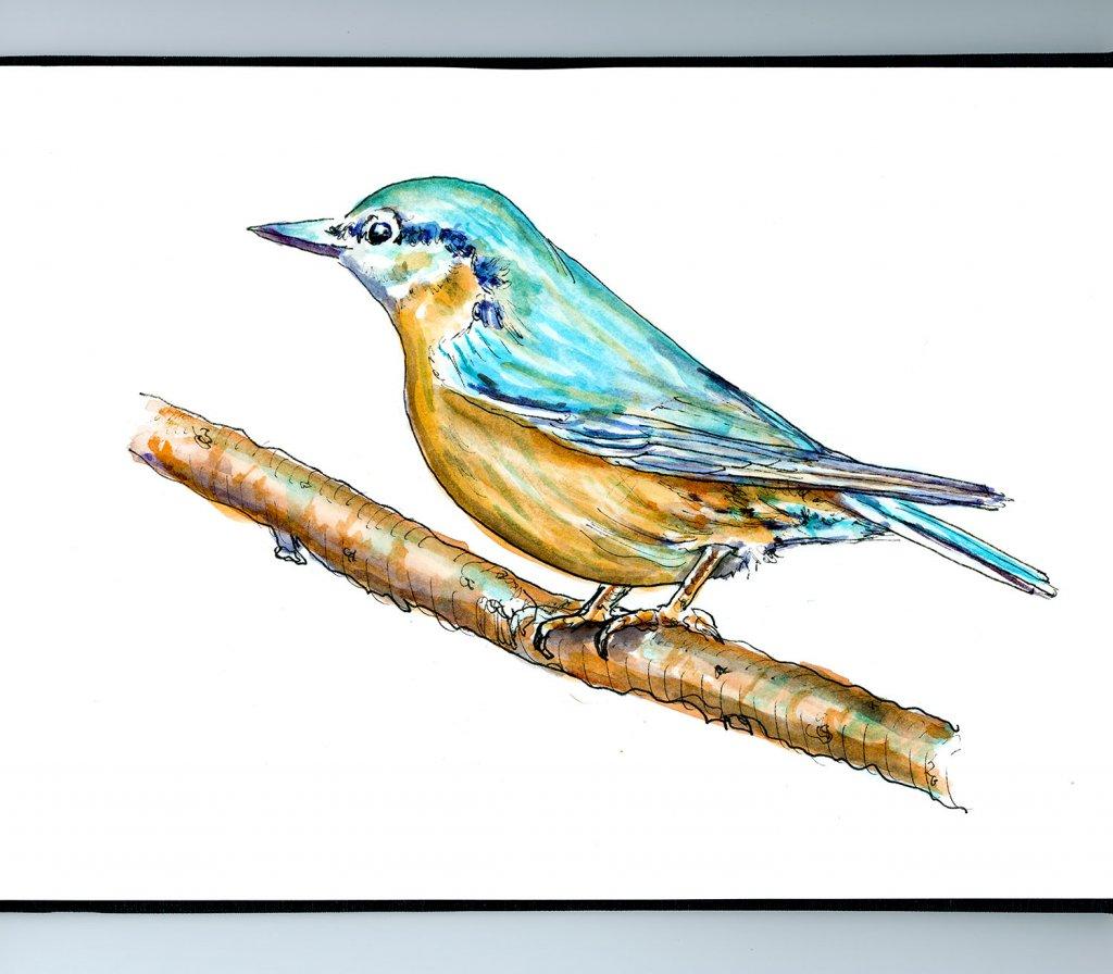 Blue Bird On Branch Watercolor Illustration Sketchbook Detail