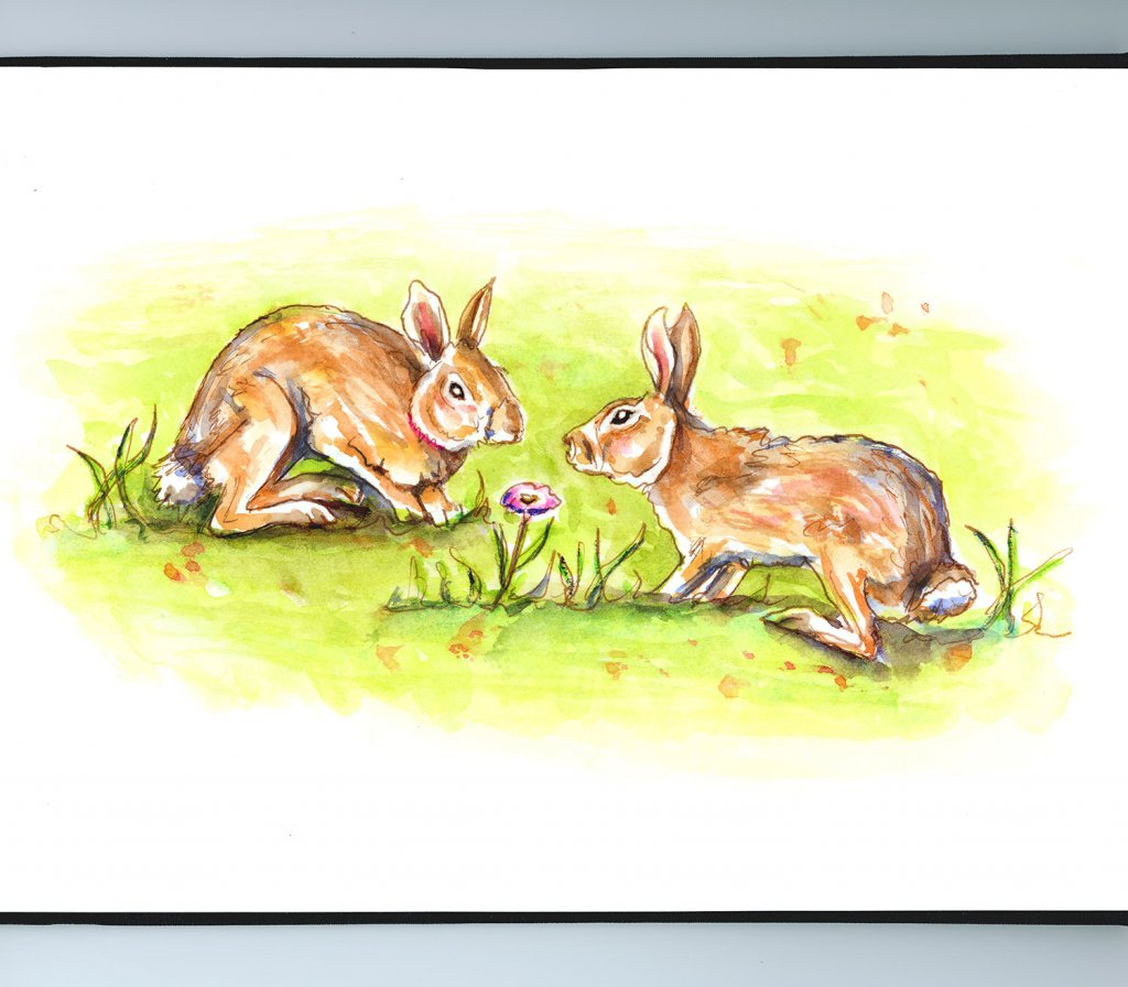 Two Rabbits Bunnies Watercolor Illustration Sketchbook Detail